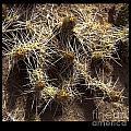 Cacti1 by Jonathan Fine