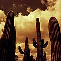 Cactus 2 by M Landis