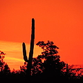 Cactus Against A Blazing Sunset by Bill Tomsa