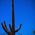 Cactus And Moon by Christopher Meade