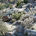 Cactus And Rocks by Deborah Smolinske