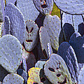 Cactus Faces by Garry Gay