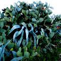 Cactus Family Almeria Region Spain 2013 January by Colette V Hera  Guggenheim