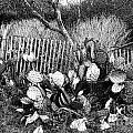 Cactus Fence- Hill Country Texas by Douglas Barnard