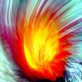 Cactus Fire 2 by Douglas Taylor