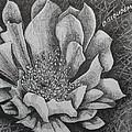 Cactus Flower by Denis Gloudeman