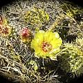 Cactus Flower by William Hallett