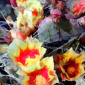 Cactus Flowers Bright And Prickly by Elaine Plesser