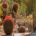 Cactus Garden by Marilyn Smith
