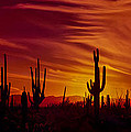 Cactus Glow by Mary Jo Allen