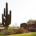 Cactus Golf by Scott Pellegrin