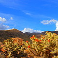 Cactus In Spring by James Welch