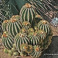 Cactus In The Garden by Tom Janca