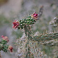 Cactus  by Janice Sanborn