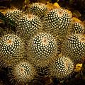 Cactus by Michael J Samuels