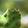 Cactus by Nick LaRocque