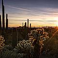 Cactus Sunset  by Saija  Lehtonen