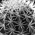 Cactus Thorn Pattern by Phyllis Denton