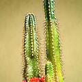Cactus Towers by Carlos Vieira