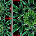 Cactus Triptych by Barbara Griffin