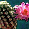 Cactus With Pink Sunlit Bloom by Elaine Plesser