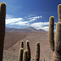 Cactus With The Andes Mountains by Christian Heeb