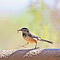 Cactus Wren With Worm by Tom Janca