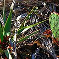 Cactuscomp2 2009 by Glenn Bautista
