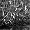 Caddo Lake 42 by Ricardo J Ruiz de Porras