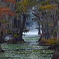 Caddo Lake Morning by Snow White