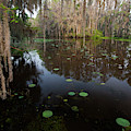 Caddo Lake, Texas's Largest Natural Lake by Larry Ditto