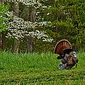 Cades Cove Spring Visions by Brian Simpson