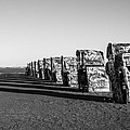 Cadillac Ranch by Jayme Spoolstra