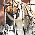 Caged But Strong by Belinda Lee