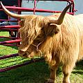 Caged Coo by Gary Olsen-Hasek