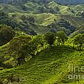 Caizan Hills by Heiko Koehrer-Wagner