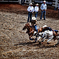 Calgary Stampede by Diane Dugas