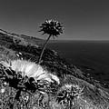 California - Big Sur 002 by Lance Vaughn