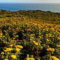 California - Big Sur 007 by Lance Vaughn