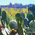 California Big Sur Flowers by Jerome Stumphauzer