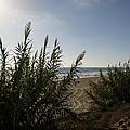 California Carlsbad Beach Hidden View by JG Thompson