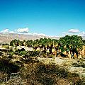 California Coachella Oasis1 by Leonid Rozenberg