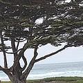 California Coast # 8 by G Berry