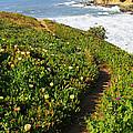 California Coast Trail by Carol Groenen