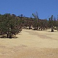 California Grass And Oak Trees by Tom Janca