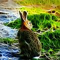 California Hare - 0297 by James Ahn