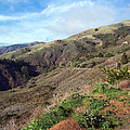 California Hillside by Jennifer Robin