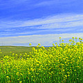 California In Spring by Rima Biswas