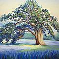 California Oak by Karin  Leonard