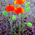 California Poppies by Barbara Moignard